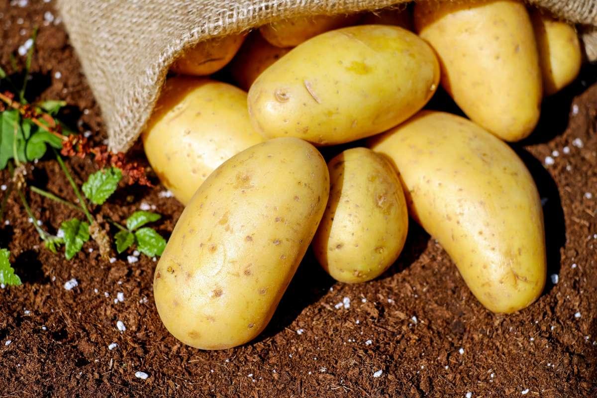 Na hranolky vybírejte brambory varného typu C. Jsou větší a moučnější.