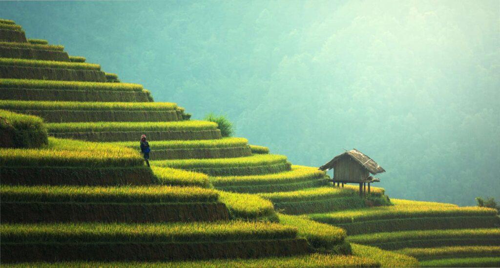 Rýžová pole mají svoji romantickou atmosféru. Akorát se na nich musí makat :-)
